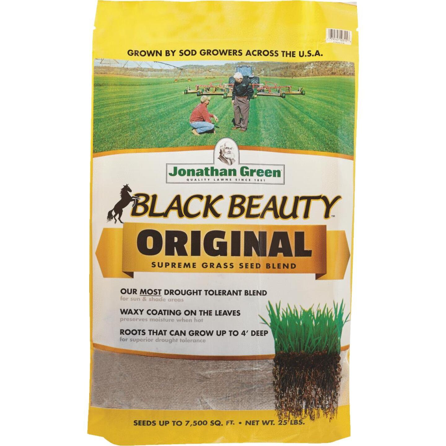 Jonathan Green Black Beauty 25 Lb. 3750 Sq. Ft. Coverage 100% Tall Fescue Grass Seed Image 1
